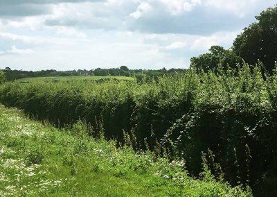fields-hedge-westridge-farm-ryde-michael-lilley-mayor
