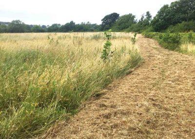 rosemary-fields-michael-lilley-mayor-ryde-isle-of-wight